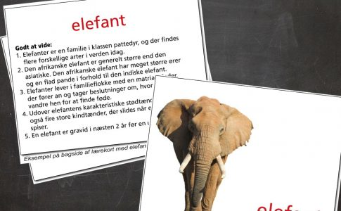 Lærekort elefant